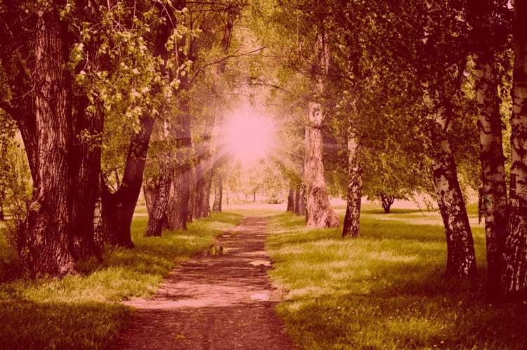 path_sun.jpg