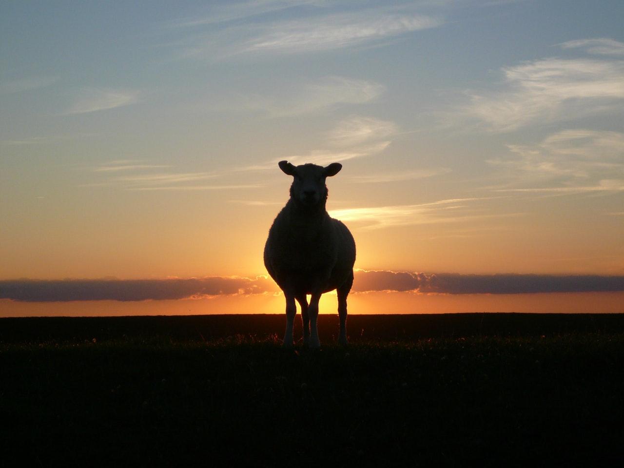 Est-ce qu'il vous faut vraiment un mouton à cinq pattes ? Ou simplement le candidat qui vous correspond ?