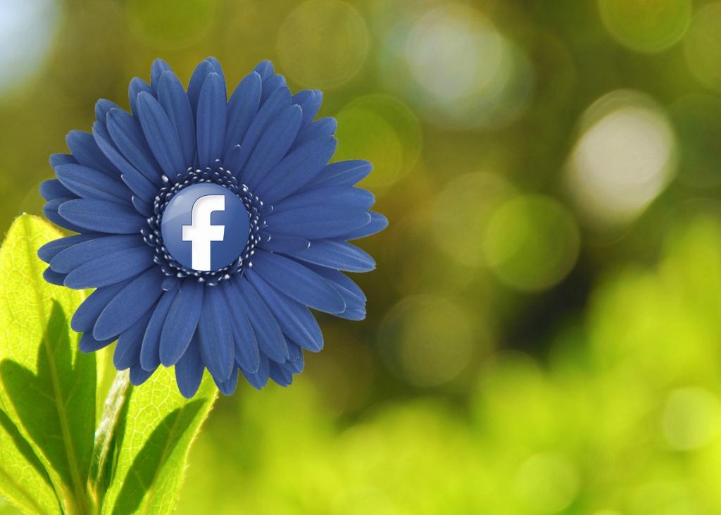 facebook_flower.jpg